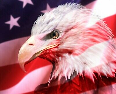 """23.5/"""" X 44/"""" Panel Bald Eagle Drapeau Américain Patriotique en tissu de coton D766.67"""