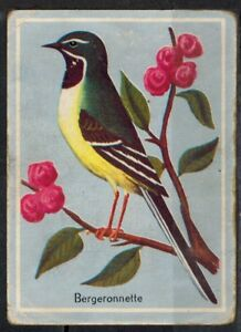 Charmant Chromo Image éducative-bergeronnette - Oiseau -bird -passereaux -réf.180 éLéGant Dans Le Style