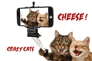 Cheese! Crazy Cats Selfie Tin Sign Shield Arched Metal 20 X 30 CM