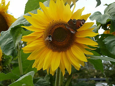 Garten-der-Sonne
