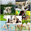 thumbnail 5 - Doodlecards Pack of 10 Standard Size Dog Lovers Birthday & Blank Cards