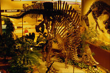 519091 Canadian Museum Of Nature Duck billed Dinosaur A4 Photo Print