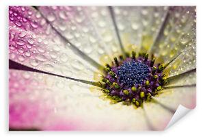 Postereck-3273-Poster-amp-Leinwand-Gerbera-Wassertropfen-Bluete-Blume-Pflanze