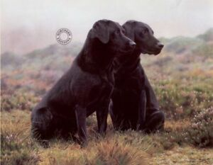 Steven-Townsend-PARTNERS-Black-Labradors-Retriever-Lab-Art-Gun-Dogs-Shooting-Art