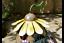 Fairy-Treehouse-Teapot-Sunflower-House-Wishing-Well-Metal-Garden-Decor-Ornament thumbnail 29
