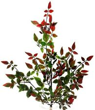 """Rose Leaf Foilage Spray Stem. 22"""" Tall . Artificial. Green~Touch of Red"""