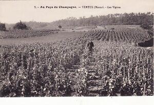 CPA-51-VERTUS-Marne-Les-Vignes-Au-Pays-du-Champagne