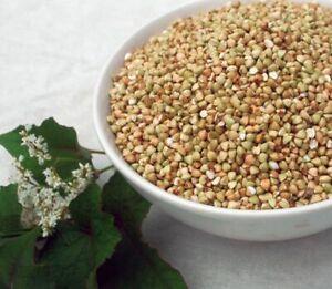 Krauterino 24-grano saraceno senza guscio tutta - 1000g