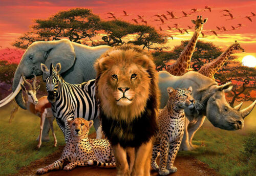 Wild Cute Animals For Children Poster Wall Art Prints Gloss Room Decor