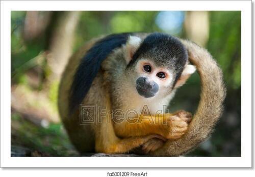 Cute Squirrel Monkey Art//Canvas Print Poster Home Decor Wall Art
