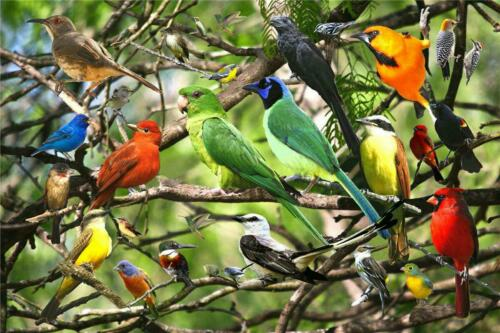 UK 500 Pieces Educational Jigsaw Puzzle Animal Landscape Bird Adult Puzzles Toys