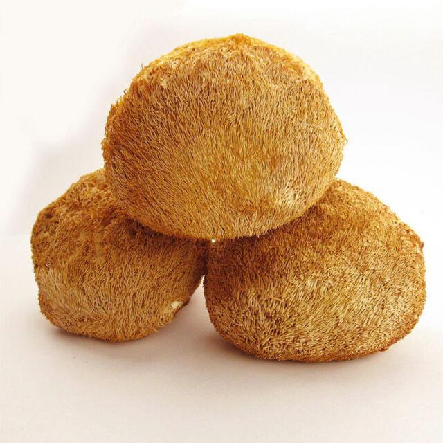 The Wild Monkey Mushroom Erinaceus Lion's Organic Hericium Dried Truffles 250g