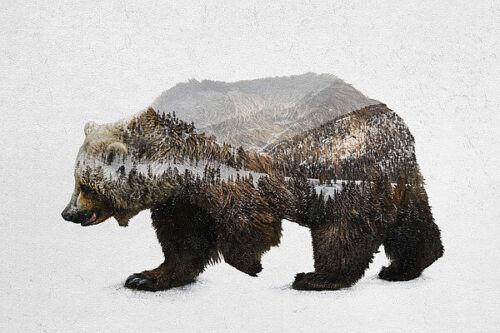 The Kodiak Brown Bear Davies Babies Animal Nature Wildlife Print Poster 24x36