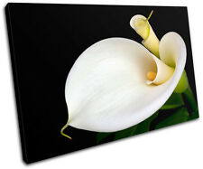 Calla Lily Flowers Floral SINGLE CANVAS WALL ART Picture Print VA