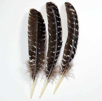 Feder echte-Vogelfeder 6//12 X Vogelfedern vom Fasan Fasanenfedern