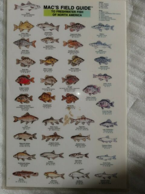 FRESHWATER FISH OF NORTH AMERICA (MAC'S GUIDES ()) 1988