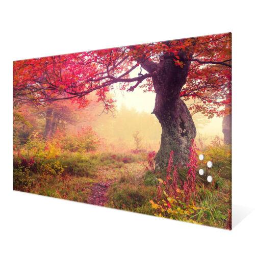 Größen Lichtung Im Herbst banjado Glas Magnettafel 4 Magneten Memoboard versch