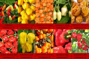 Superscharfe-Habanero-Bonnet-Tabasco-Chili-Samen-10-Sorten-Schaerfe-10-Saatgut