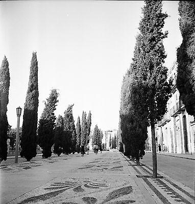 Attent Espagne C. 1955 - Avenue Montant Au Parc Archéologique - Négatif 6 X 6 - Esp 227 Uitverkoop Totale Korting 50-70%