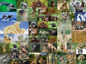 50-er-Set-Sammlung-mit-Tierpostkarten-Ansichtskarten-alles-verschiedene-Motive