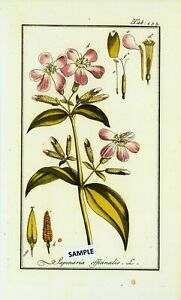 "6 Botanical Herbal Prints From ""pictures Of Medicinal Herbs"" Published In 1798 Other Antique Decorative Arts Antiques"