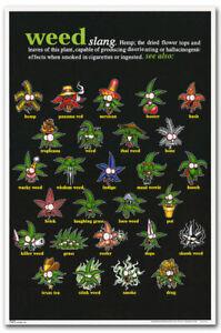 Marijuana-Theme-Weed-Slang-Terms-Fridge-Magnet-Size-2-5-034-x-3-7-034
