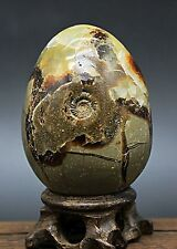 Rare Dragon Ammonites Fossil&Septarian Crystal Sphere Ball Healing /Wood stand