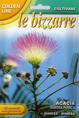 "30 Semi/Seeds ACACIA "" Mimosa Pudica """
