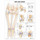 Hip and Knee Anatomical Chart by Anatomical Chart Co. (Fold-out book or chart, 2004)