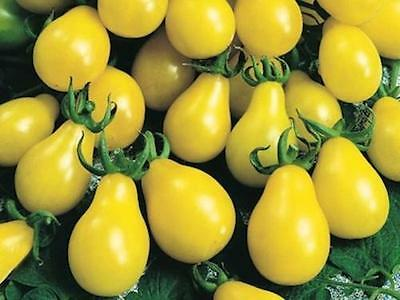 ORGANIC VEGETABLE TOMATO YELLOW PEAR / CHERRY BELL 120 SEEDS