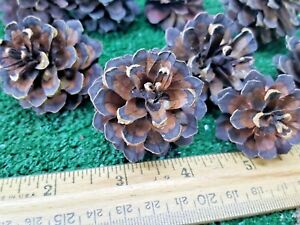 Pinecone Flowers Mix Of 10 Elemental Exchanges Easy Nature Craft Art Supplies