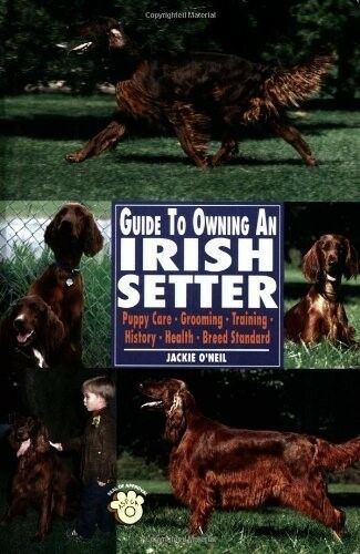 Guide to Owning an Irish Setter: Puppy Care, Grooming, Training, History, Health