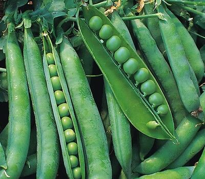 Vegetable - Pea - Greenshaft - 40 Seeds - Economy