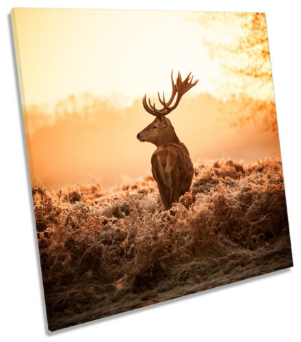 Stag Deer Golden Sunset Forest Toile Wall Art Carré Photo Print