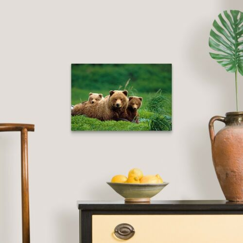 Bear Home Decor Grizzly bear mother and cubs lay in Canvas Wall Art Print