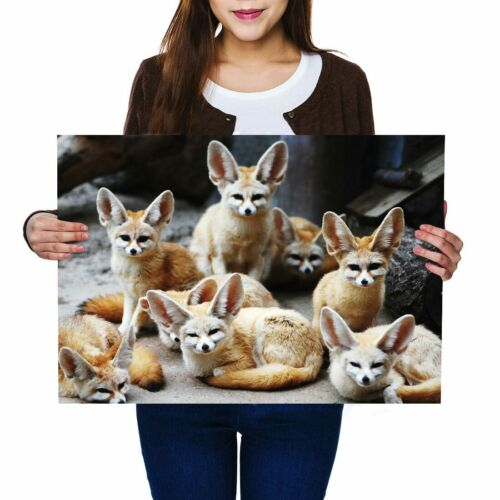 A2 Cute Fennec Fox Pack Foxes Poster 59.4X42cm280gsm #44773