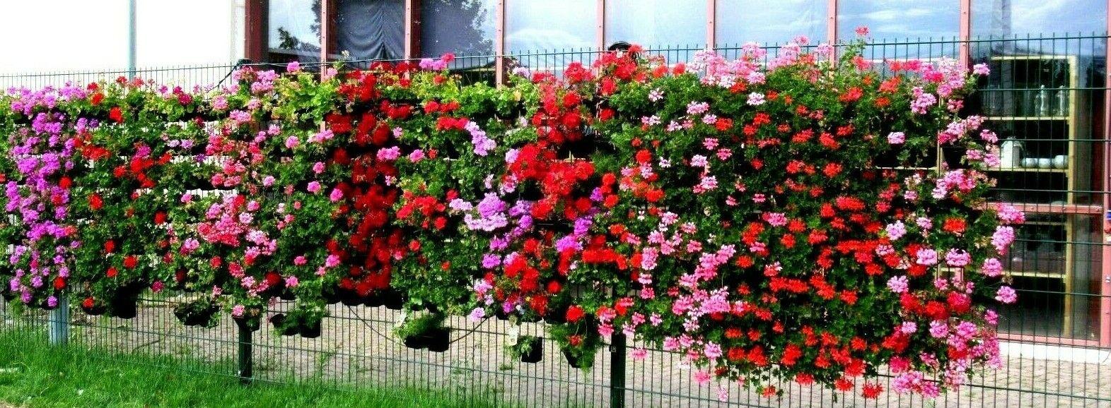 100 xBlaumentöpfe für Zaunbegrünung Sichtschutzzaun Hängepflanztopf