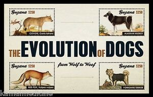 Dogs-Evolution-from-Grey-Wolf-Domestic-Animals-Guyana-2012-MNH-4v-SS-Rc07
