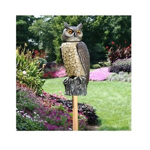 Delicieux Image Is Loading Owl Scarecrow Rotating Head Garden Porch Patio Deck