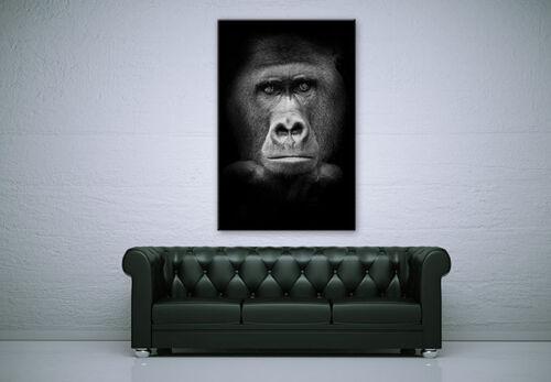 Acrylglas XXL Wandbild Gorilla schwarz//weiß BILD hohe Farbechtheit WANDDEKO