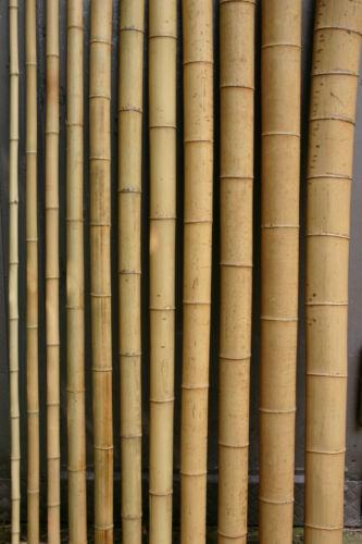20 x Bambusrohr 4-5 cm 2m Bambusrohre Bambusstange Bambusstangen Bambus