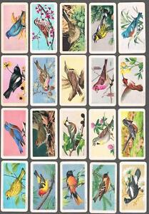 1959-Brooke-Bond-Songbirds-of-North-America-Trading-Cards-Complete-Set-of-48