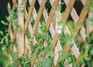 Expanding-Natural-Wooden-Trellis-Climbing-Plants-Fence-Panel-Screening-Lattice