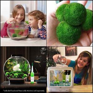 DIY-Giant-Marimo-Moss-Ball-Cladophora-Live-Aquarium-Plant-Fish-Aquarium-Decor