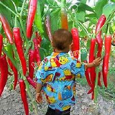 10Pcs casa giardino spezie giganti rare Rosso piccante Peperoncino Semi