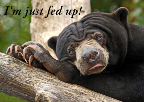 Fed Up Quote Poster Sweet Cute Teddy On Nature Picture Animal Bear Funny
