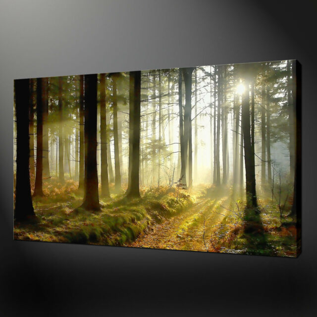 MISTY FOREST RAYS QUALITY CANVAS PRINT WALL DESIGN READY TO HANG