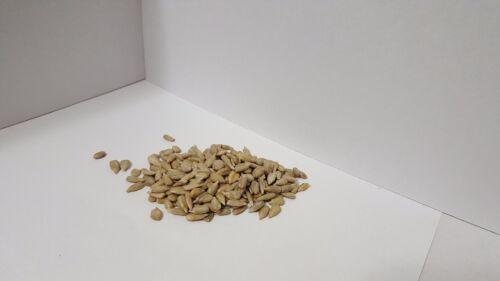 Sunflower seedSemilla de girasol 1//2 Kg NATURAL 1,10 PoundLibra