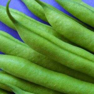 SOW NOW Premium Quality FREE POST 10 Dwarf French Green Bean /'Sprite/' Seeds