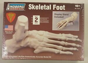 Lindberg 1/1 Life Size Foot Skeleton Anatomy Science Project Model ...
